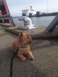Kenzo på havnen i frederikshavn