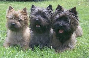 Kody, Karl-Ejner og Hubert